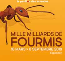 Exposition Mille milliards de fourmis - Pavillon des Sciences Montbéliard